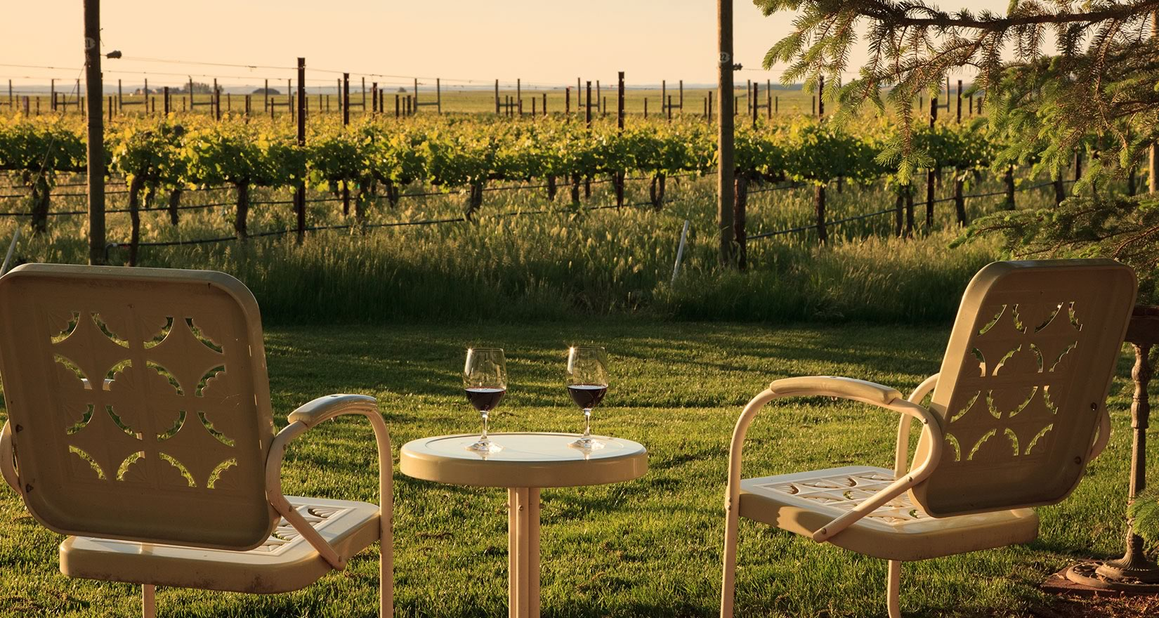 Vineyard with chairs and wine
