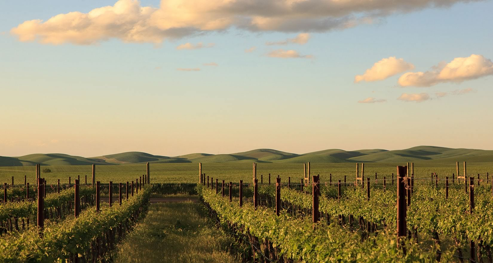 Palouse vineyards