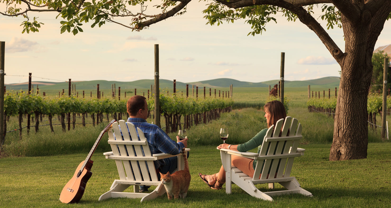 People sitting beside a vineyard