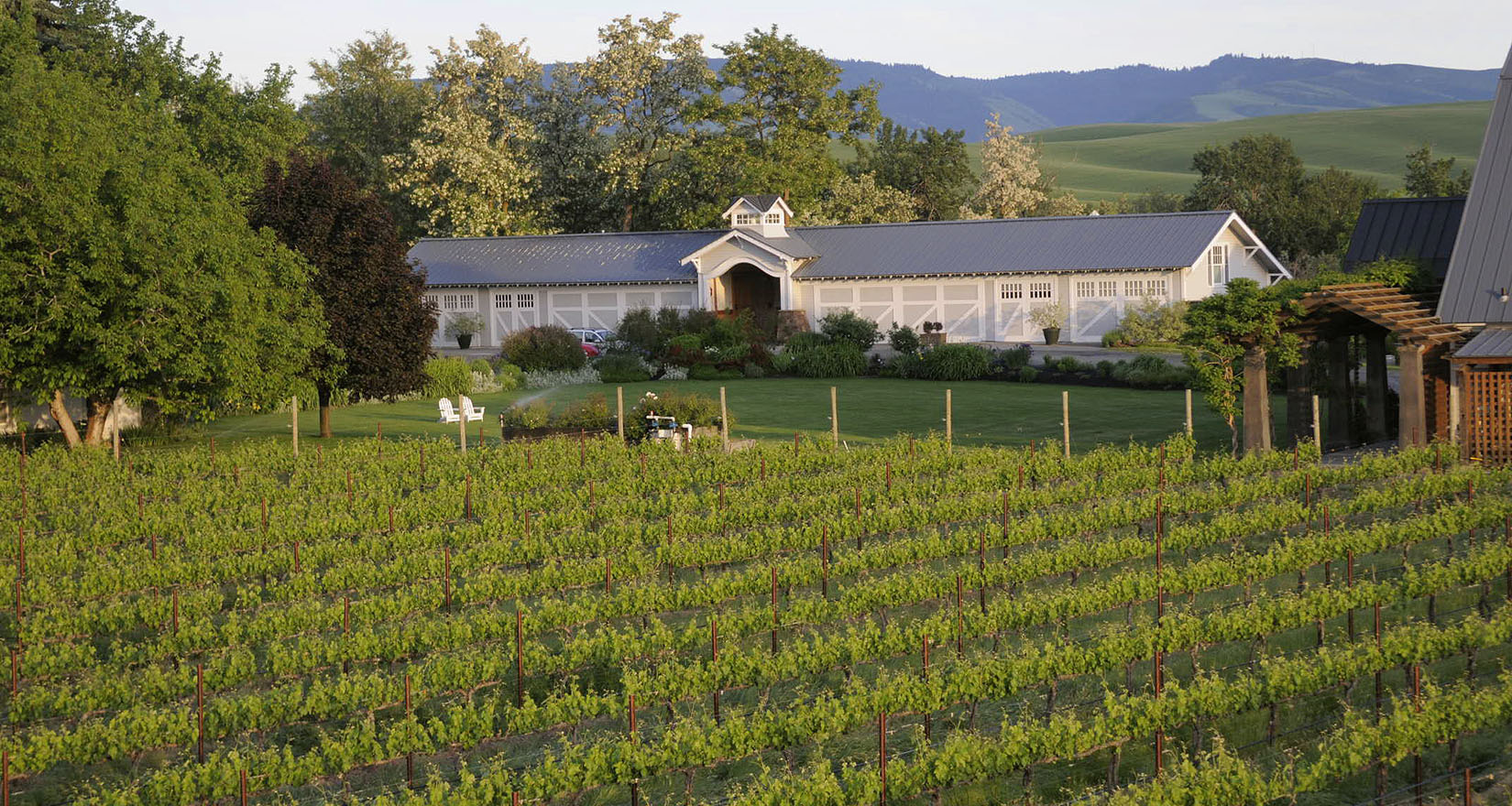 Abeja vineyard and building
